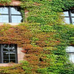 facade-1028210